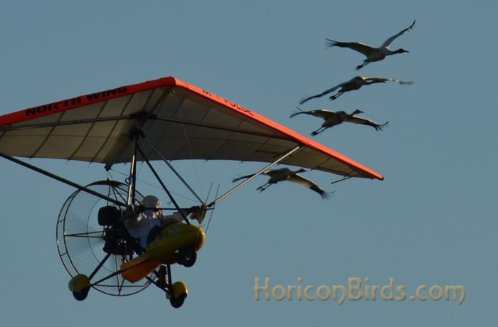 Richard van Heuvelen leads with four cranes, 2 October 2013, photo by Pam Rotella